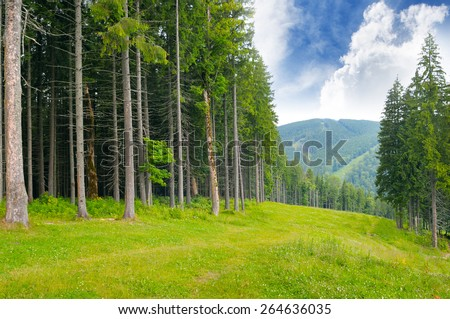 pine wood on the hillside - stock photo