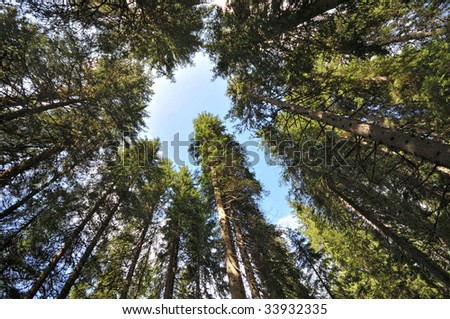 Pine woods of Val di Fassa, Dolomites, Alps, Italy - stock photo