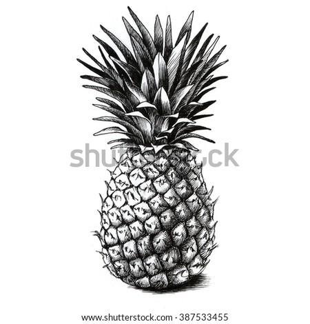 Pineapple drawing - stock photo