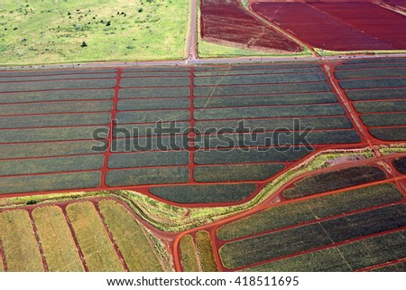Pineapple Plantation in central Oahu, Hawaii - stock photo