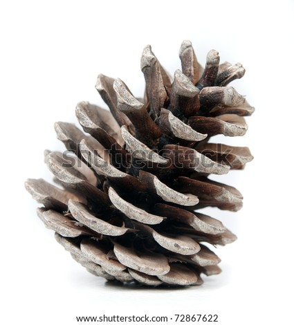 pinecone on a white background, natural light. - stock photo