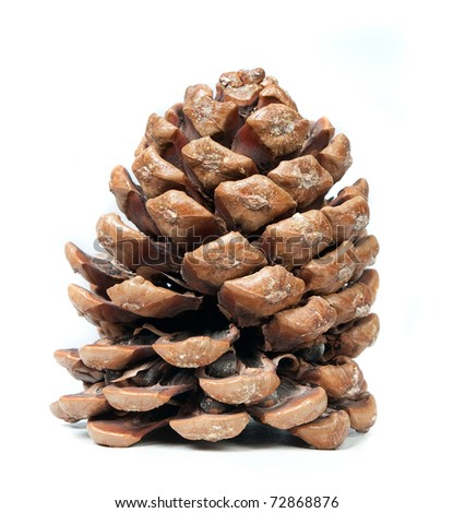 pinecone on a white background, natural light.