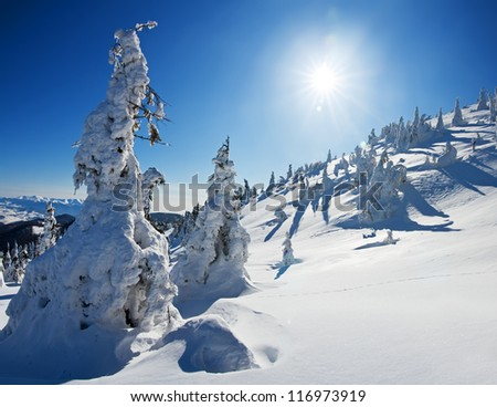 Pines covered with snow on a mountain hill, winter landscape - stock photo