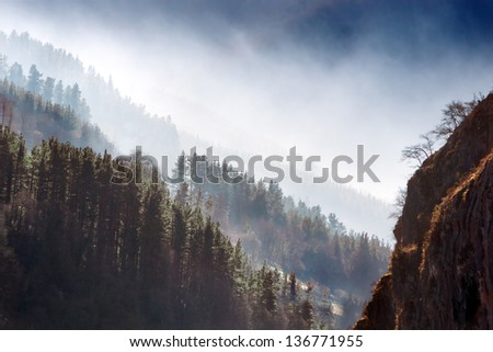 pines forest with fog in the morning - stock photo