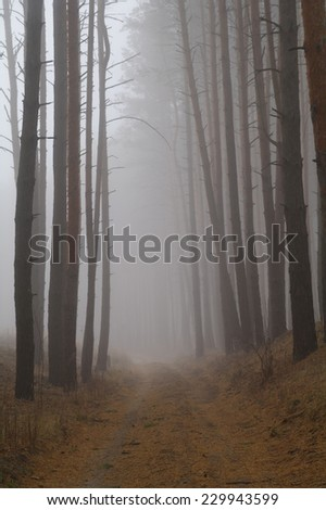 Pines in the forest with morning  - stock photo