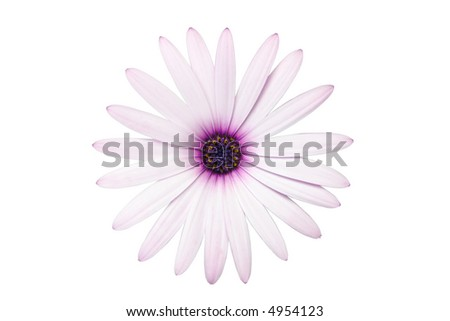 "Pink African Daisy ""cut and paste"" decal"