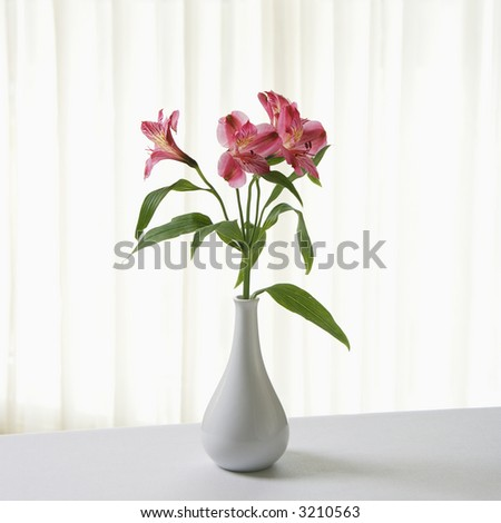 Pink Alstremeria flowers in white vase. - stock photo