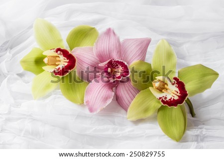 Pink and green orchids - white background - stock photo