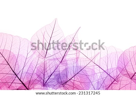 Pink and Purple Border of transparent Leaves - isolated on white background - stock photo