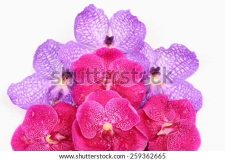 Pink and purple orchid flower isolated on white background - stock photo