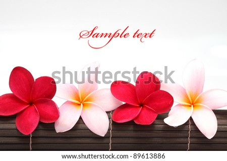 Pink and red Frangipani Plumeria flower on the mat - stock photo