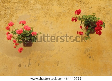 pink and red geranium in flowerpots on wall in Italy - stock photo