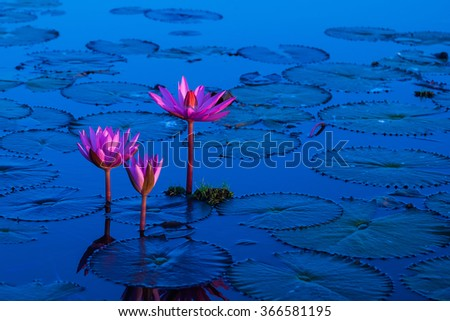 Pink and red lotus lake at Udonthani Thailand - stock photo