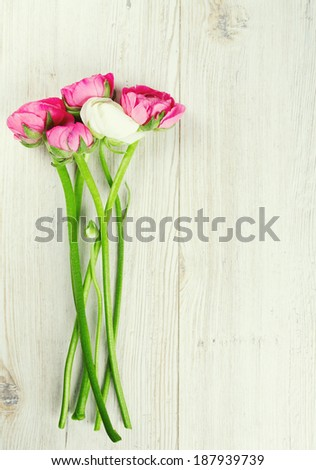 pink and red ranunculus on wooden table and copy-space for your text