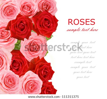 Pink and red roses background isolated on white with sample text
