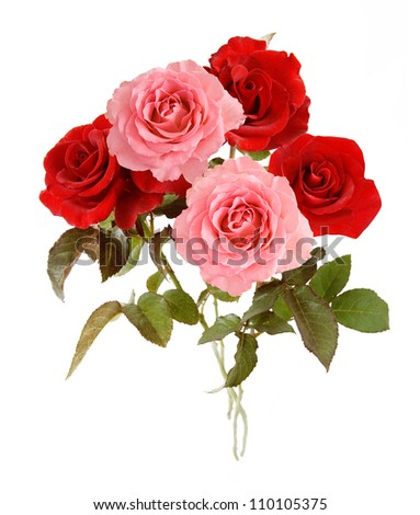 stock-photo-pink-and-red-roses-bunch-isolated-on-white-background-110105375