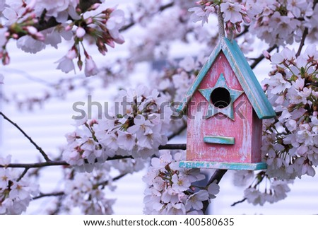 Pink and teal blue birdhouse hanging from spring flowering tree branch; white blossoms blurred in background - stock photo
