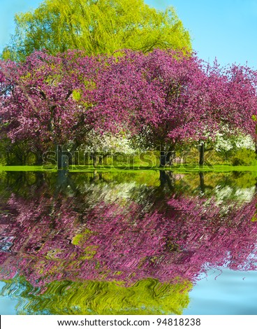 Pink and White Blossom fruit trees reflection in the water - stock photo
