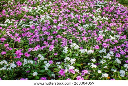 Pink and white flowers in park - stock photo