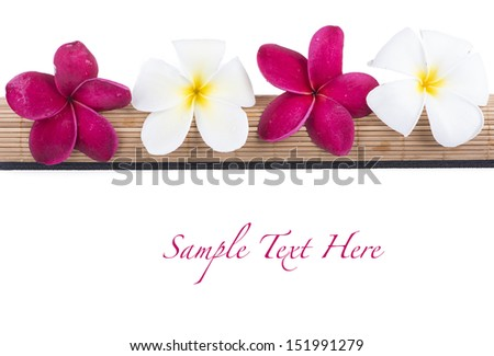 Pink and white Frangipani Plumeria flower on the mat isolated on white background - stock photo