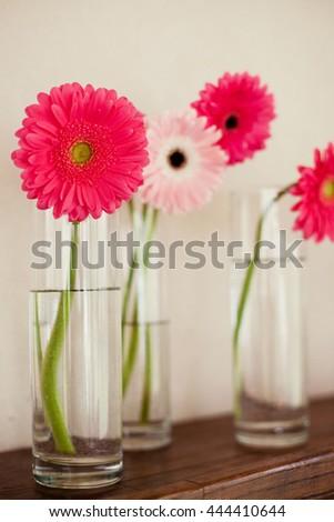 Pink White Gerbera Vase Stock Photo Edit Now 444410644 Shutterstock