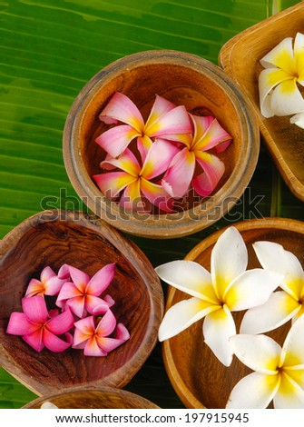 Pink and white Plumeria in wooden bowl on banana leaf
