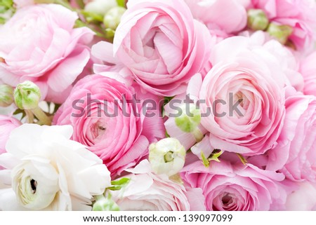 Pink and white ranunculus background - stock photo
