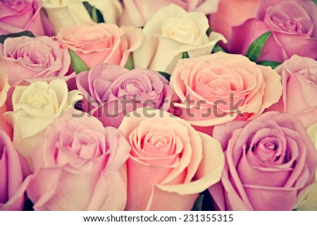 Pink and white roses background, shallow depth of field. Retro vintage instagram filter - stock photo