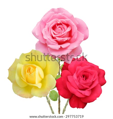 Pink and, yellow red rose bunch isolated on white background - stock photo