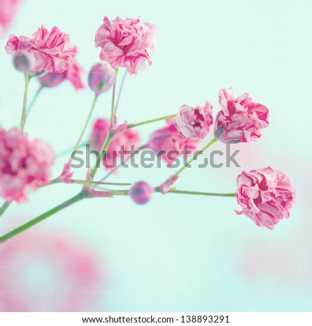 Pink baby's breath flowers on light blue pastel shabby chic textured background, soft and delicate floral pattern - stock photo