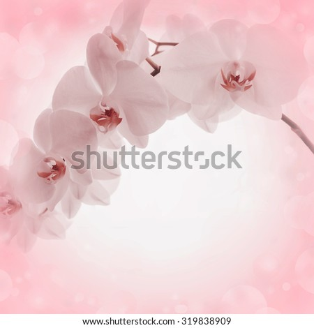 Pink background with orchid flowers  - stock photo