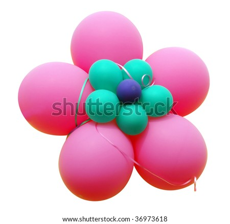 Pink Balloon Flower isolated with clipping path