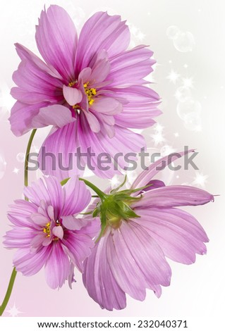 Pink beautiful flower.Spring bouquet - stock photo