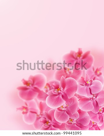 Pink beautiful Orchid Flowers - stock photo