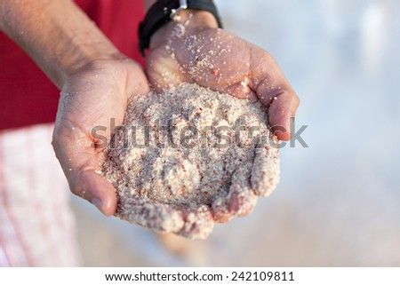 Pink Bermuda sand close up in the hands of a young man. Shallow depth of field. - stock photo