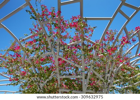 pink bougainvillea flowers against the sky - stock photo