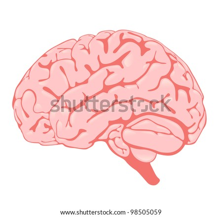 pink brain the side view - stock photo