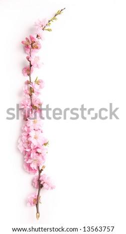 pink branch, floral design element - stock photo