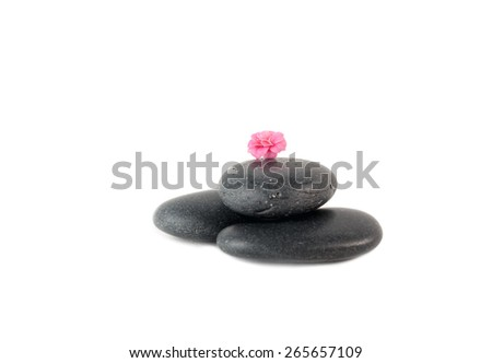 Pink Buds on smooth black stones isolated over white - stock photo