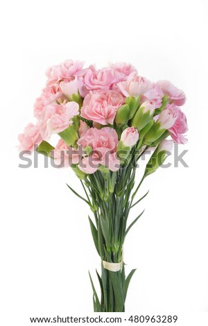 pink carnation flowers on white background