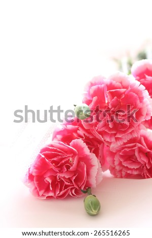 Pink Carnation with copy space for Mother's day image - stock photo