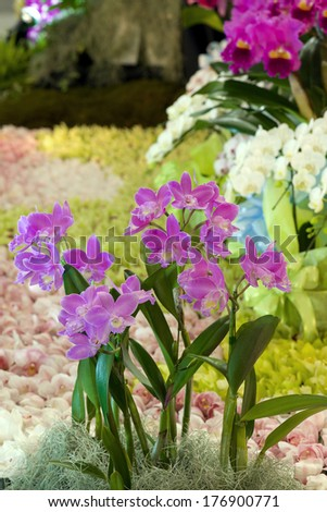 Pink cattleya orchids in a landscape setting at an orchid show - stock photo
