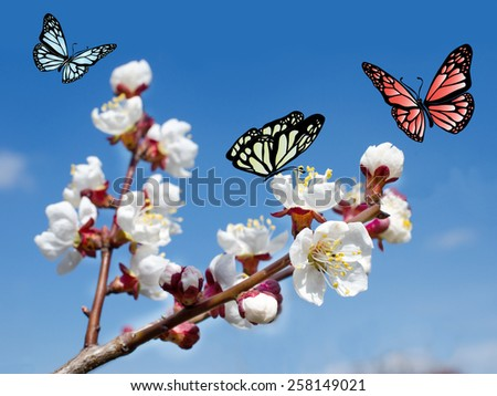 Pink cherry blossoms in garden outdoors close up. - stock photo