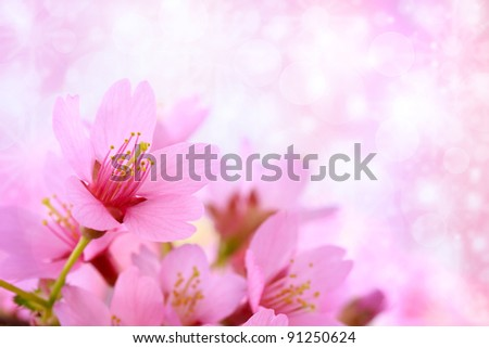 Pink cherry blossoms with abstract lights background - stock photo