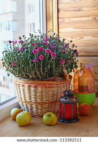 Pink chrysanthemum apples and a lantern on a balcony - stock photo