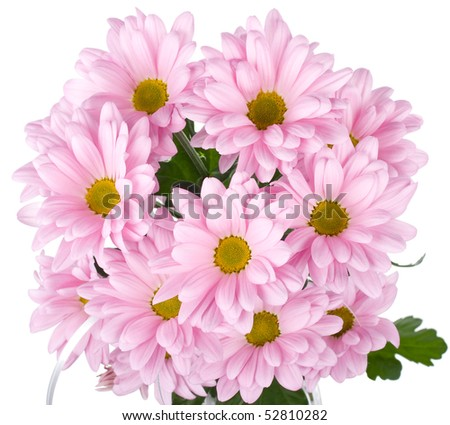 pink chrysanthemum flowers bouquet - stock photo