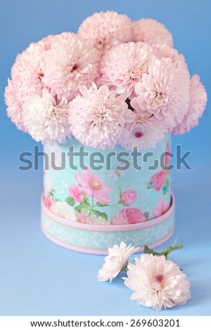 pink chrysanthemum flowers in a beautiful box on a blue background. - stock photo