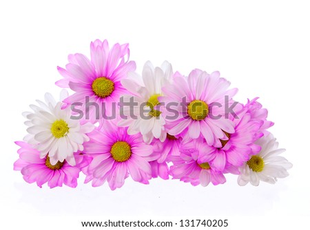pink chrysanthemum flowers isolated on white, bouquet - stock photo