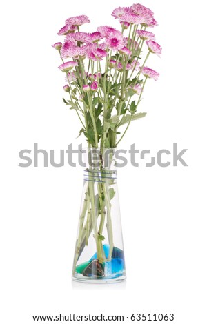 Pink chrysanthemums in a transparent vase on white background.