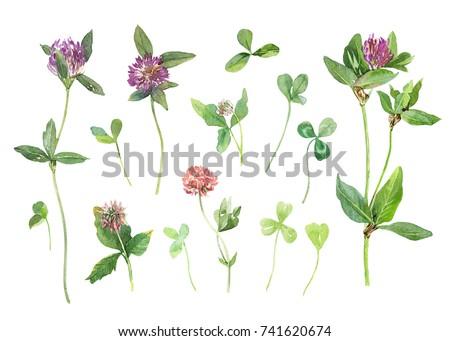 Pink Clover Set Watercolor Flowers Leaves Stock Illustration ...